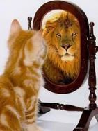 confidence cat lion