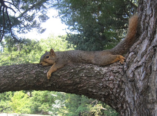 squirrel do not disturb